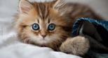 Котенок. Фото с сайта lookw.ru