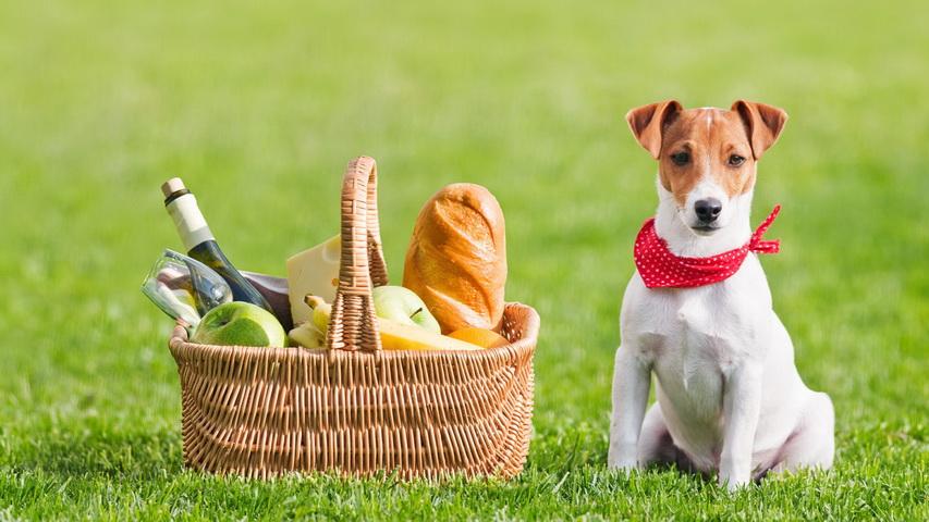 Собака на пикнике. Фото с сайта saintless.city
