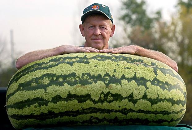 Самая большая ягода