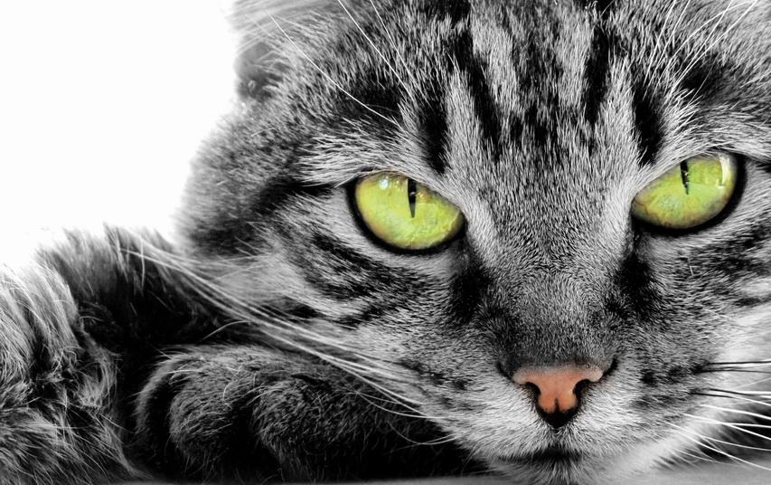 Серая кошка. Фото с сайта ba-bamail.com
