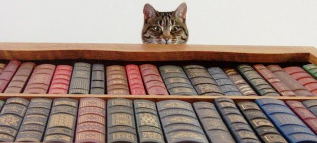 Кошка и книги. Фото с сайта developer.alexanderklimov.ru