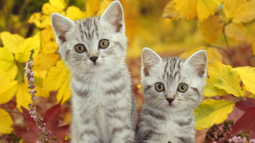 Котята осенью. Фото с сайта pinterest.com