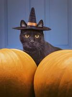 Хэллоуин. Фото с сайта positiveland.ru