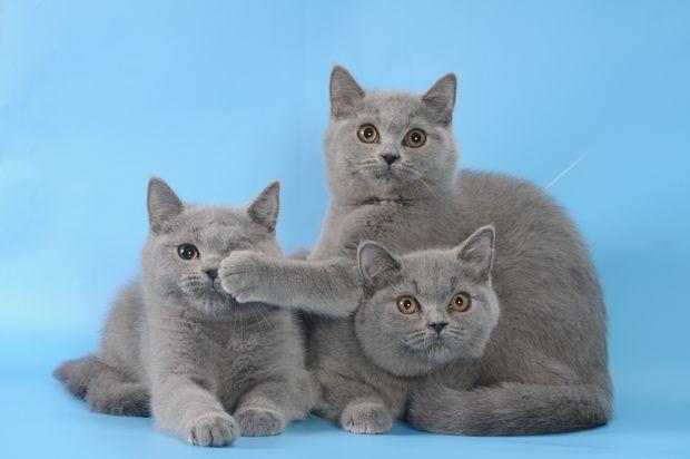 Кошки. Фото с сайта rolandus.org