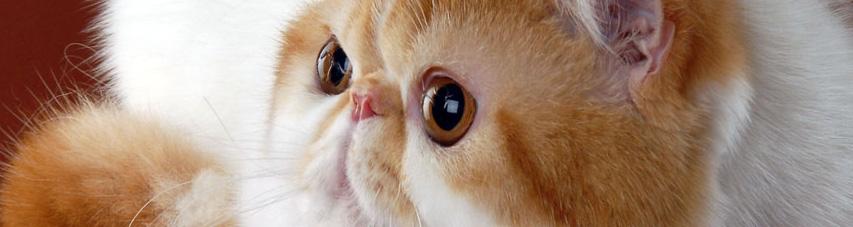 Фото с сайта aroundcat.com