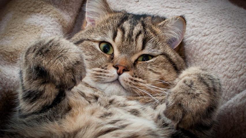 Кот. Фото с сайта ekb.citifox.ru