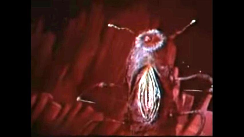 Кадр из фильма «Битва выше солнца»
