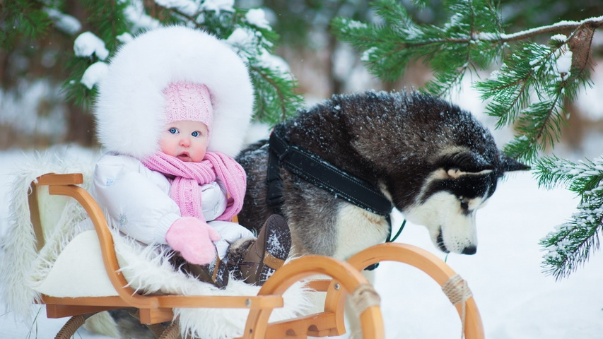 Девочка и хаска. Фото с сайта nastol.com.ua