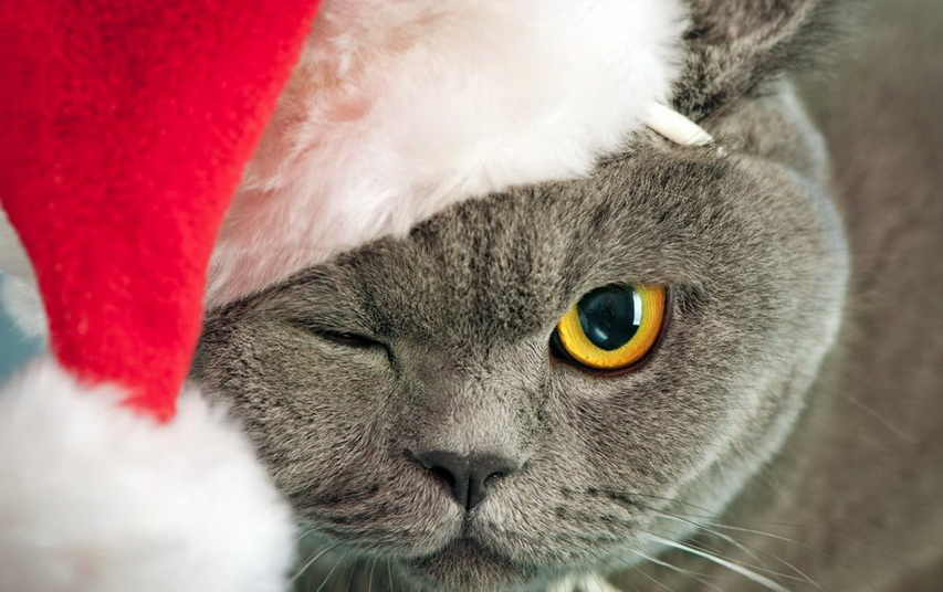 Кот в шапке Санты. Фото с сайта fonovyerisunki.ru
