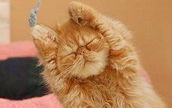 Утро рыжего кота