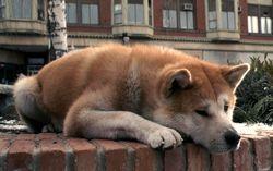 Кадр из фильма «Хатико. Самый верный друг»
