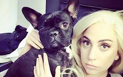 Леди Гага с домашним питомцем. Фото с сайта Hello.ru