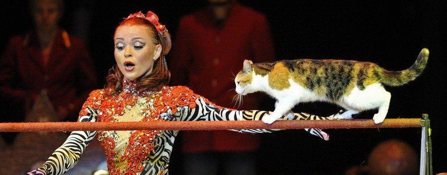 Программа «Шоу звезд цирка». Фото предоставлено организаторами
