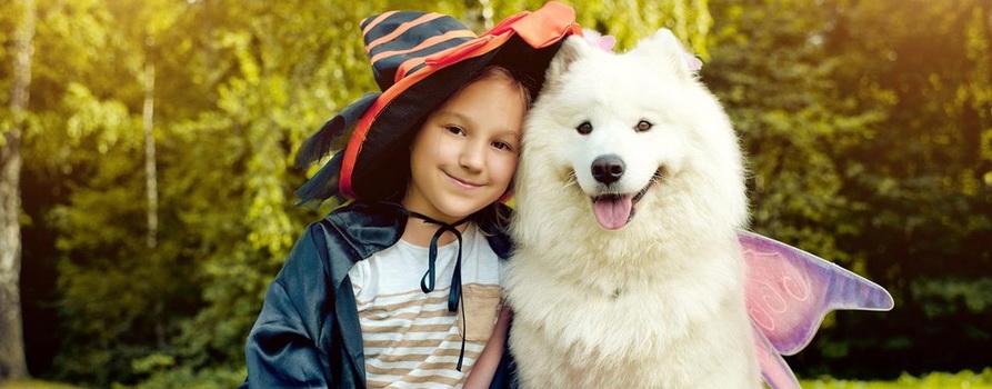 Фото собаки-самоеда и девочки с сайта lapkins.ru