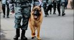 Фото с полицейской собакой с сайта thequestion.ru
