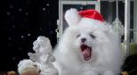 Фото с щенком лайки с сайта photo.99px.ru