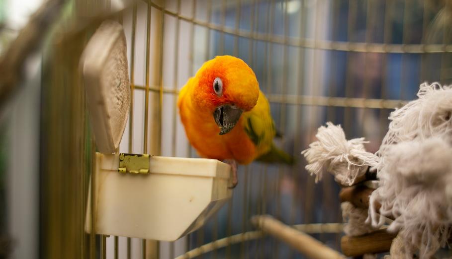 Попугай в контактном зоопарке в Гринвиче в Екатеринбурге. Фото — Weburg