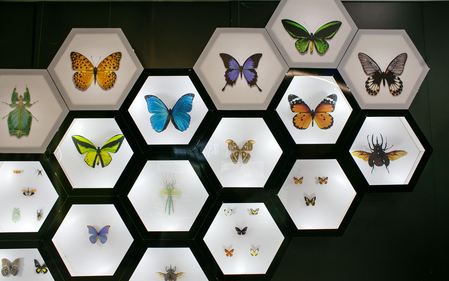 Бабочки в контактном зоопарке в Гринвиче в Екатеринбурге. Фото — Weburg