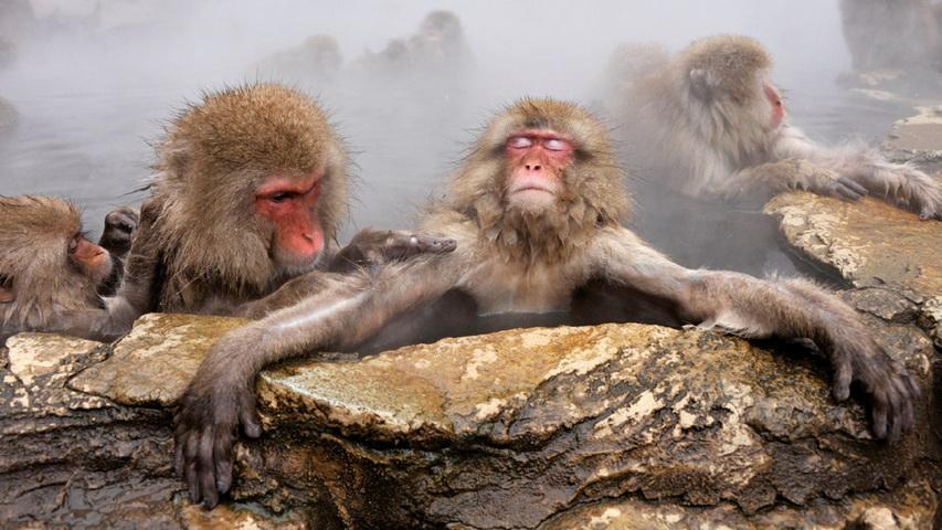 Джигокудани — парк снежных обезьян. Фото с сайта travelask.ru