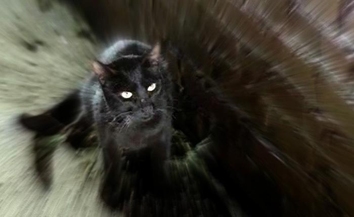 Кадр из фильма «Черный кот»