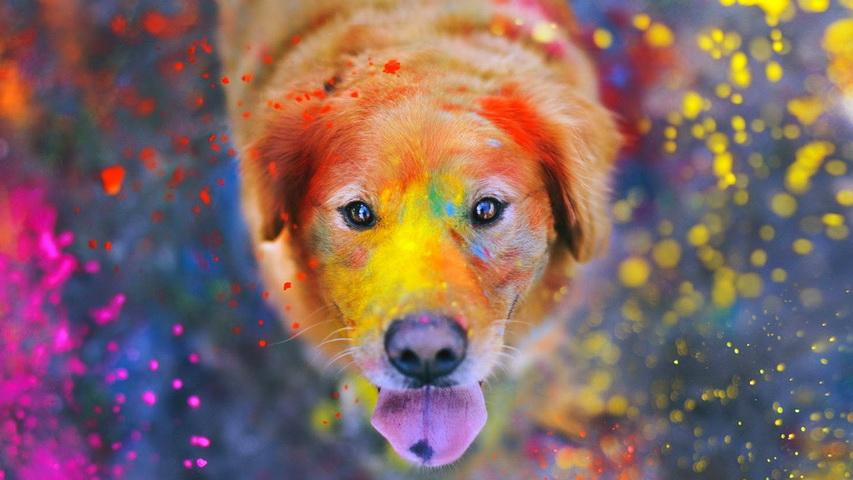 Фестиваль красок. Фото с сайта 2do2go.ru