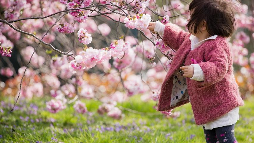 ИКЦ Япония зовет горожан полюбоваться цветущими яблонями. Фото с сайта mogdb.ru