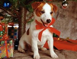 Собака под елкой. Фото с сайта gavmoda.ru