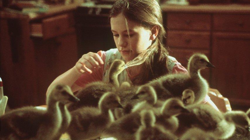 Кадр из фильма «Летите домой»
