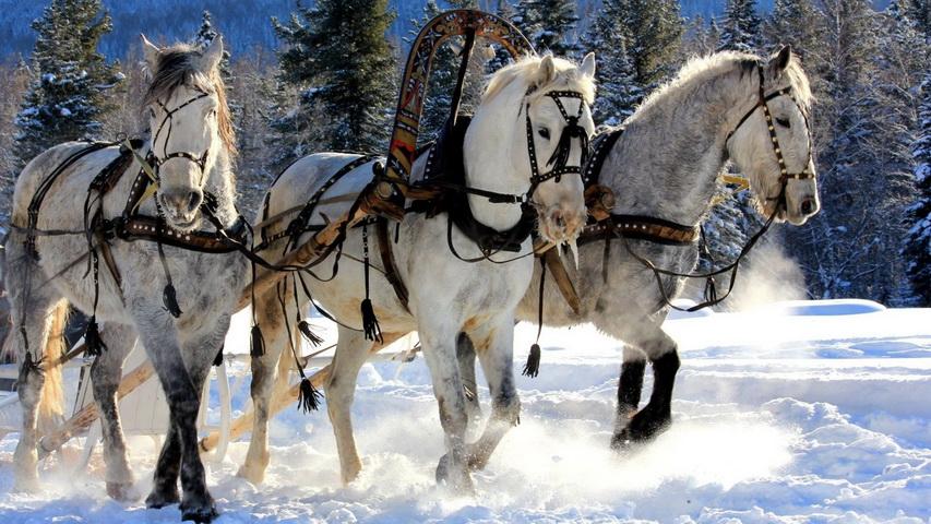 Тройка лошадей. Фото с сайта on-desktop.com