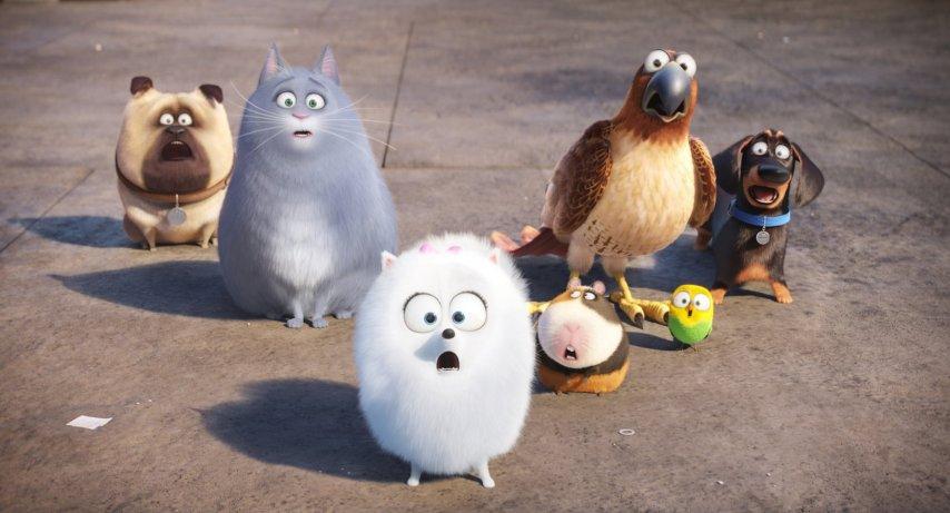 Кадр из фильма «Тайная жизнь домашних животных»
