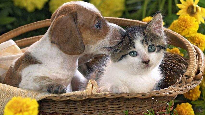 Щенок и котенок. Фото с сайта classpic.ru