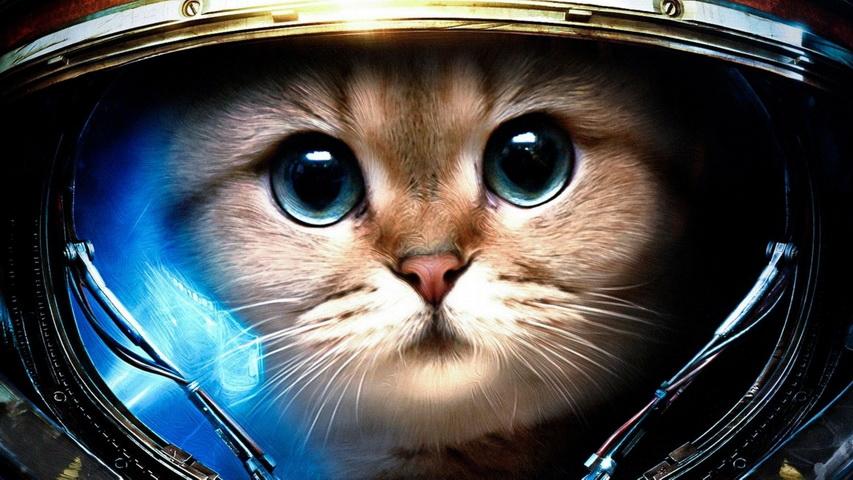 Кот-космонавт. Фото с сайта joyreactor.cc
