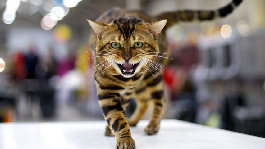 Кот. Фото с сайта washingtonpost.com