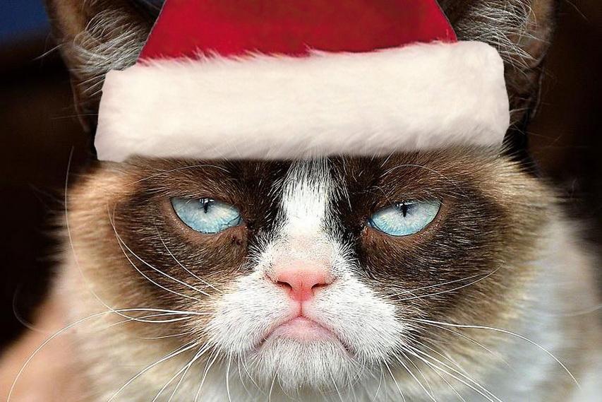 Новогодняя Grumpy cat. Фото с сайта orig14.deviantart.net