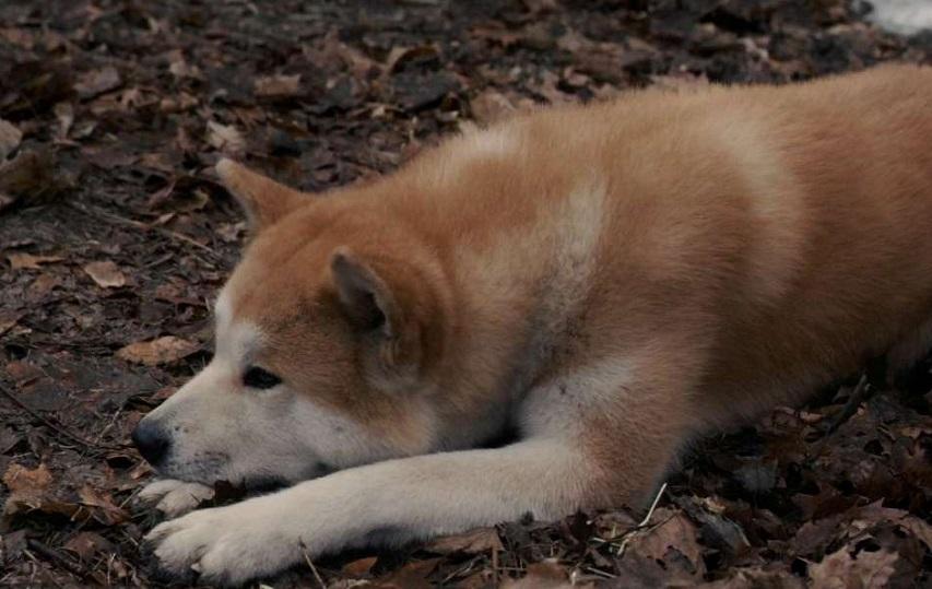 Кадр из фильма «Хатико: Самый верный друг»