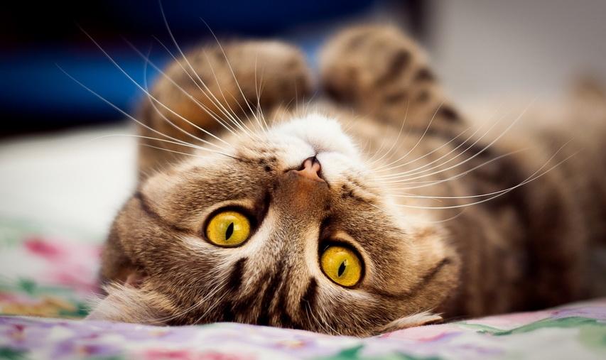 Кошка. Фото с сайта mygazeta.com