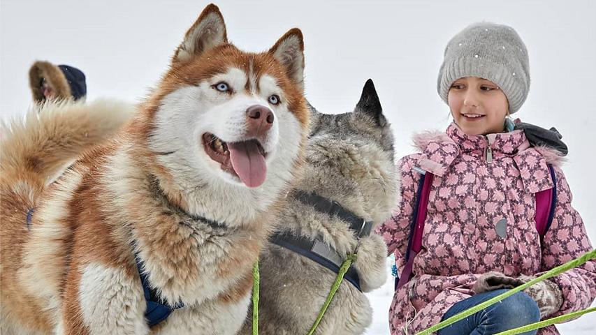 Праздник для всей семьи на случаю 23 февраля в Парке Маяковского, «Белой лошади» и Парке сказов. Фото с сайта haip.host