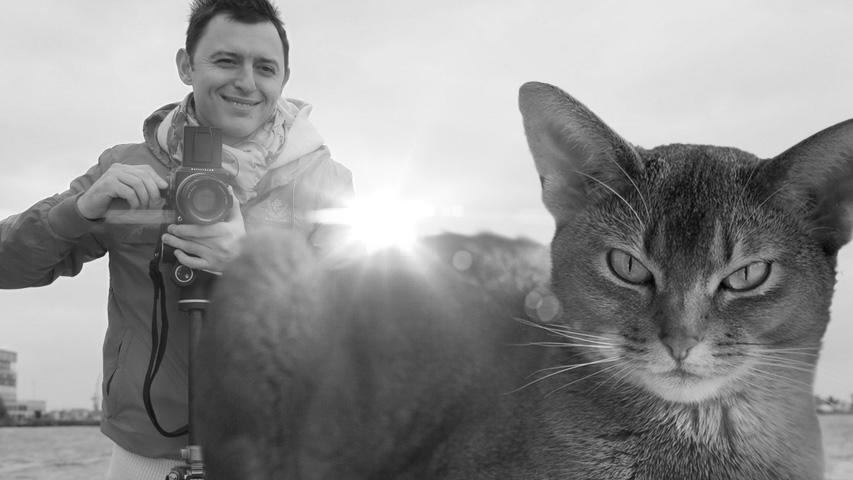 Фотографии Ромы Зверя, выставка кошек, экскурсия и видео-арт. Коллаж © Weburg
