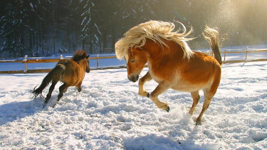 Лучшие развлечения для все семьи: открытие зимнего сезона КСК «Белая лошадь», Праздник Дедов Морозов на Уктусе и Рождественский концерт в Герценке. Фото с сайта malvorlagen.club