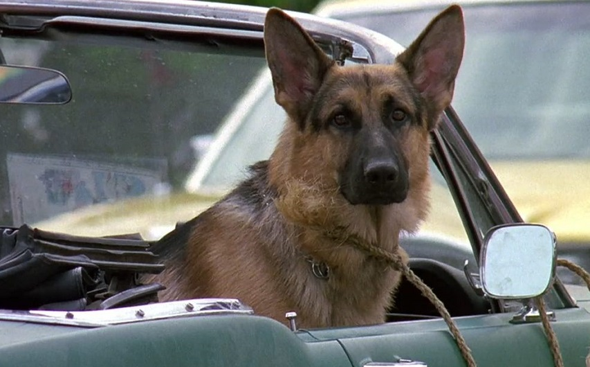Кадр из фильма «К-9. Собачья работа»