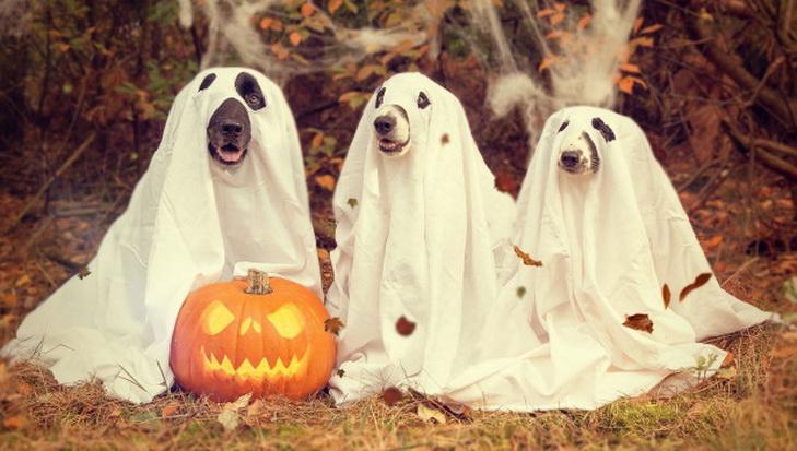 Фото с собаками с сайта altapress.ru