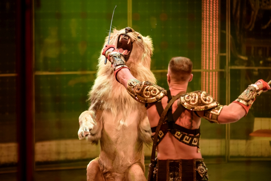 Фото с циркового представления предоставлено организаторами