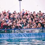 Мобильный дельфинарий в Екатеринбурге, фото 5