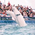 Мобильный дельфинарий в Екатеринбурге, фото 6