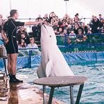 Мобильный дельфинарий в Екатеринбурге, фото 7
