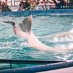 Мобильный дельфинарий в Екатеринбурге, фото 8