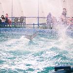 Мобильный дельфинарий в Екатеринбурге, фото 9