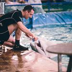 Мобильный дельфинарий в Екатеринбурге, фото 10