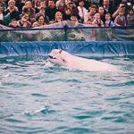 Мобильный дельфинарий в Екатеринбурге, фото 12