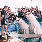 Мобильный дельфинарий в Екатеринбурге, фото 13